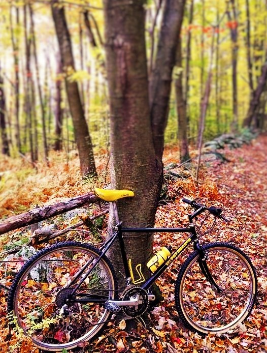 Trail Pics-wicked-pic-sml.jpg
