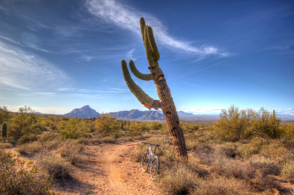 did you ride today?-wild-horse-saguaro.jpg