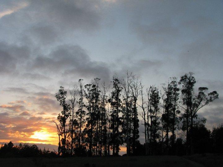 Assignment: Norcal Sunset Photos-wildersunset.jpg