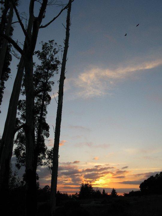 Assignment: Norcal Sunset Photos-wildersunset2.jpg