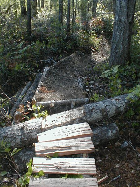 Log ramps: Good? Bad? And how best to build them?-wildwood1.jpg