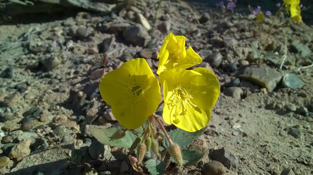 Botany Thread-wp_20150419_09_25_03_pro.jpg