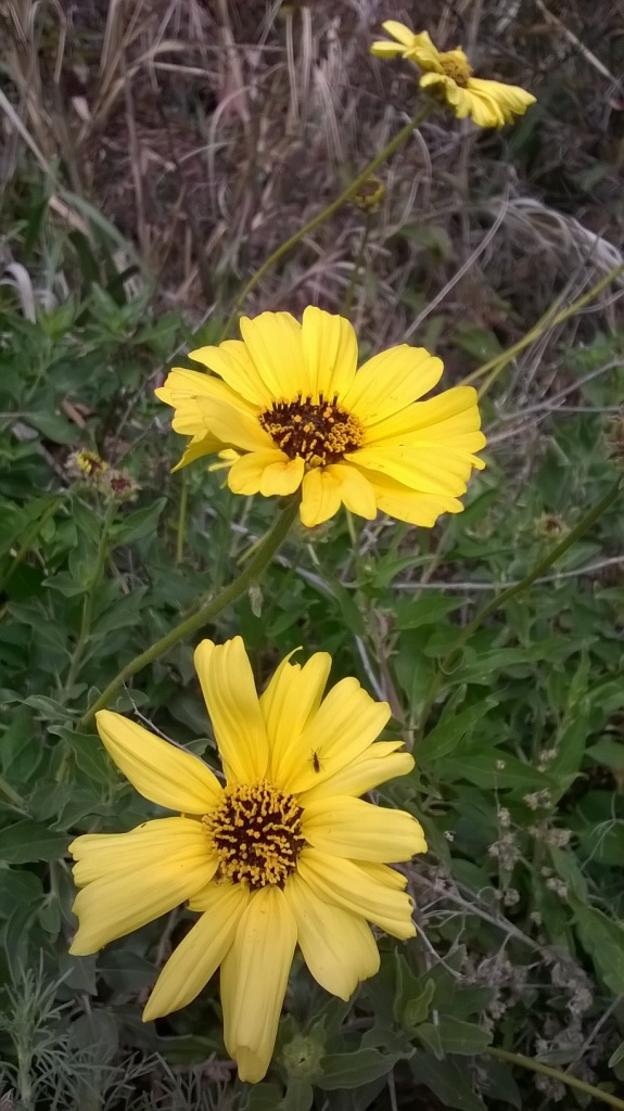 Botany Thread-wp_20160214_12_58_19_pro.jpg