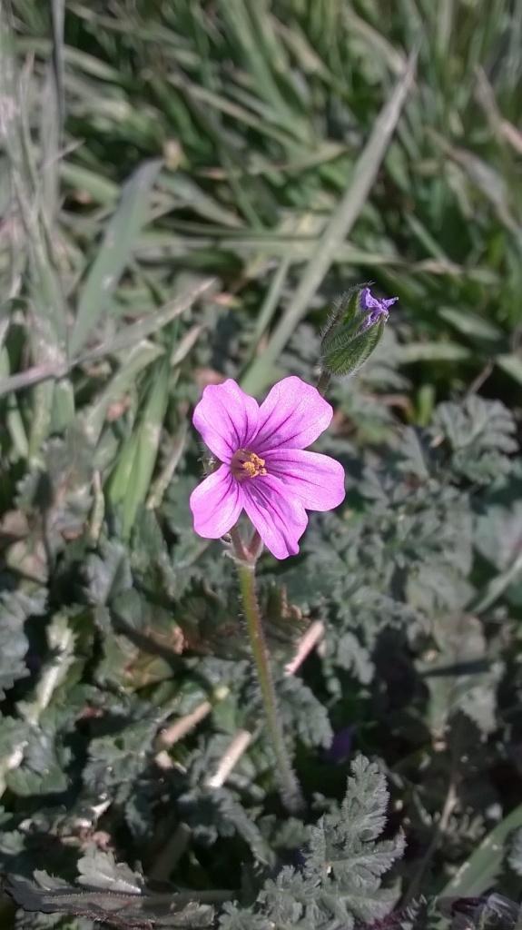 Botany Thread-wp_20160220_13_41_33_pro.jpg