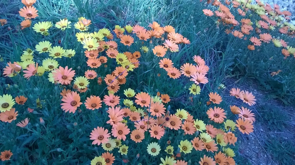 Botany Thread-wp_20160220_14_15_19_pro.jpg