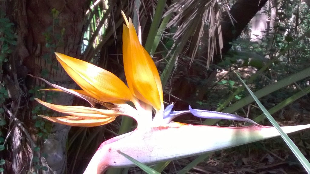 Botany Thread-wp_20160221_10_36_15_pro.jpg