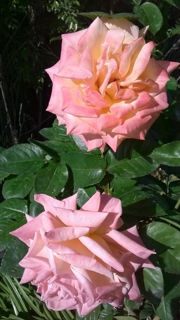 Botany Thread-wp_20160302_09_47_26_pro.jpg