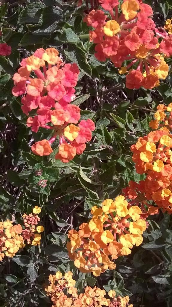 Botany Thread-wp_20160302_09_48_05_pro.jpg