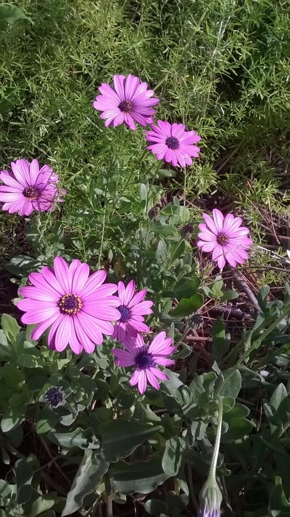 Botany Thread-wp_20160302_09_49_02_pro.jpg
