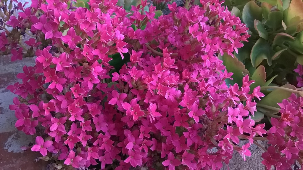 Botany Thread-wp_20160303_08_52_37_pro.jpg