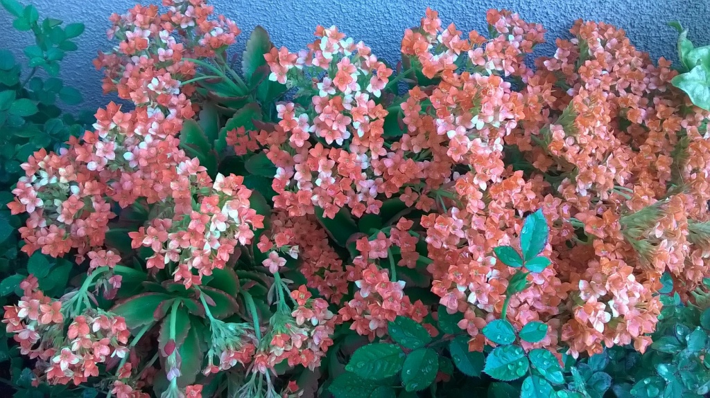Botany Thread-wp_20160303_08_52_49_pro.jpg