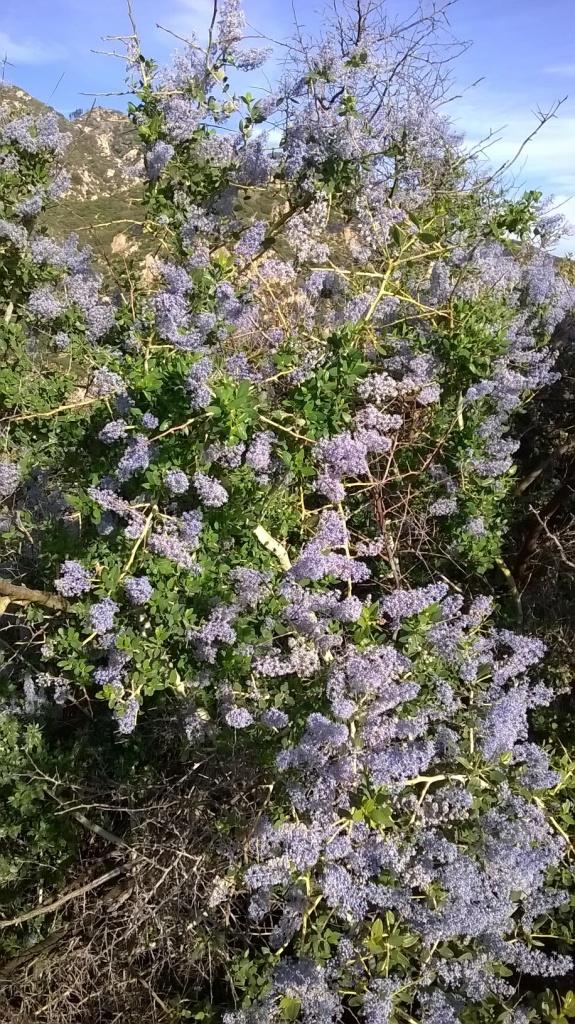 Botany Thread-wp_20160310_16_05_48_pro.jpg
