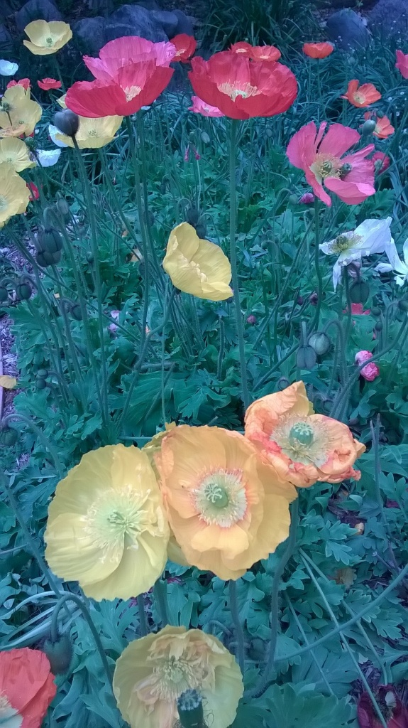 Botany Thread-wp_20160311_12_46_43_pro.jpg