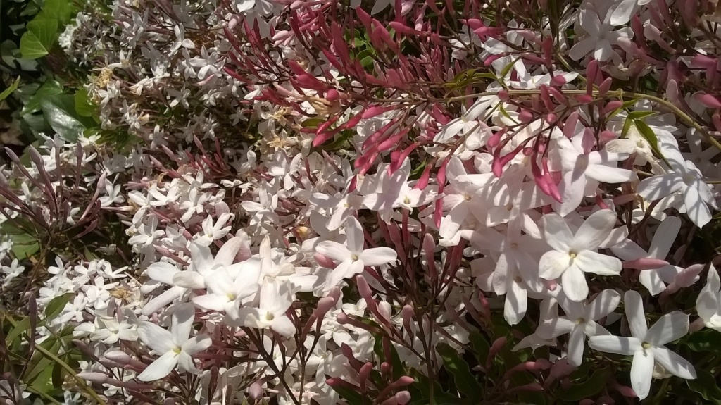 Botany Thread-wp_20160314_17_49_30_pro.jpg