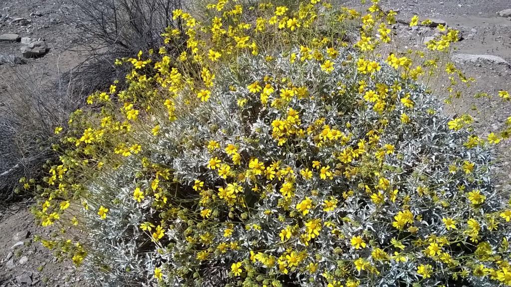 Botany Thread-wp_20160319_13_39_29_pro.jpg