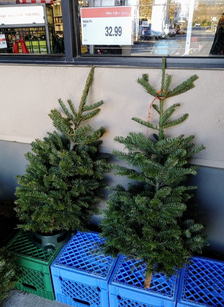 Have you gotten your Xmas tree, yet?-xmas-trees.jpg
