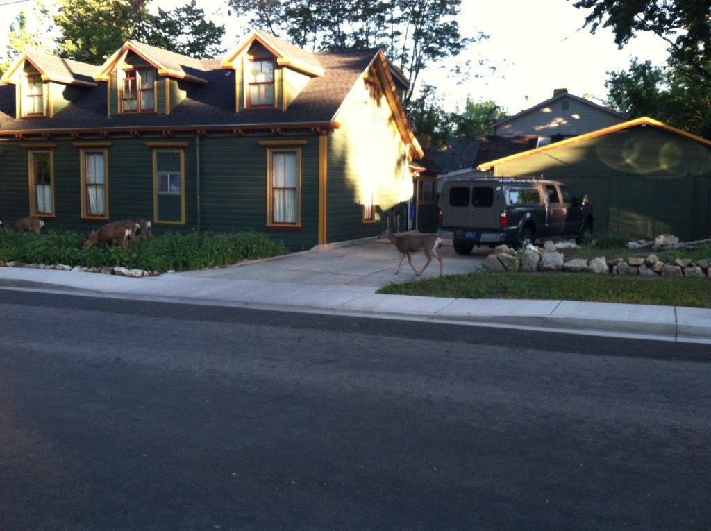 Fat Biking and health-yard-deer.jpg