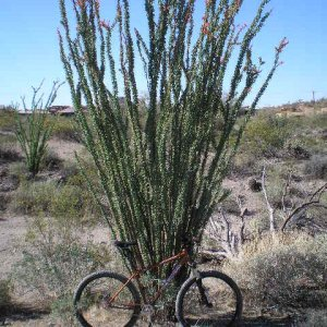 Explosif and Ocotillo