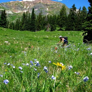 Waist Deep in Wildflowers and Gobs of Green